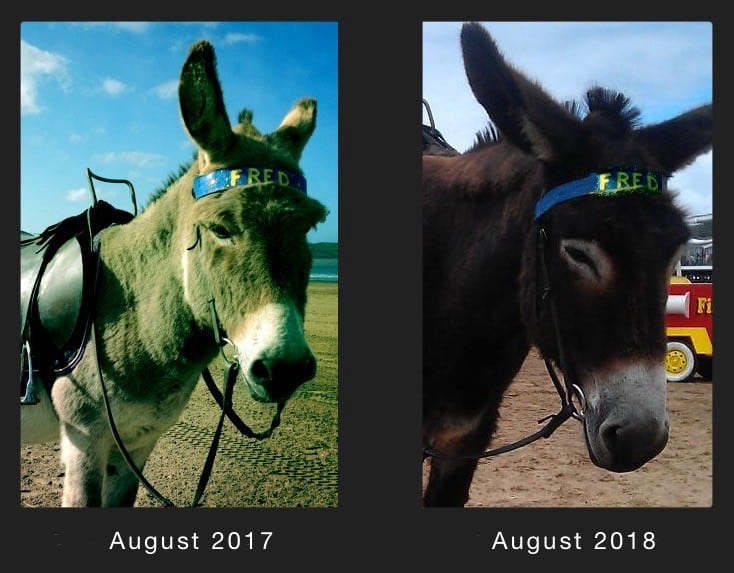 How Fred the Donkey Taught me to Lose My Fear of Death