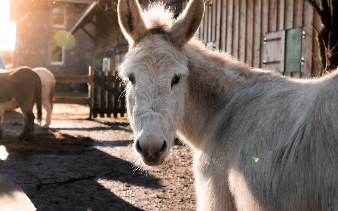 How to Write a Page-turner using a flatulent donkey
